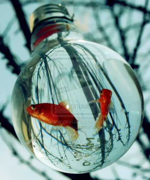 cute-fish-fish-glas-water-gold-fish-water-winter-Favim.com-82039